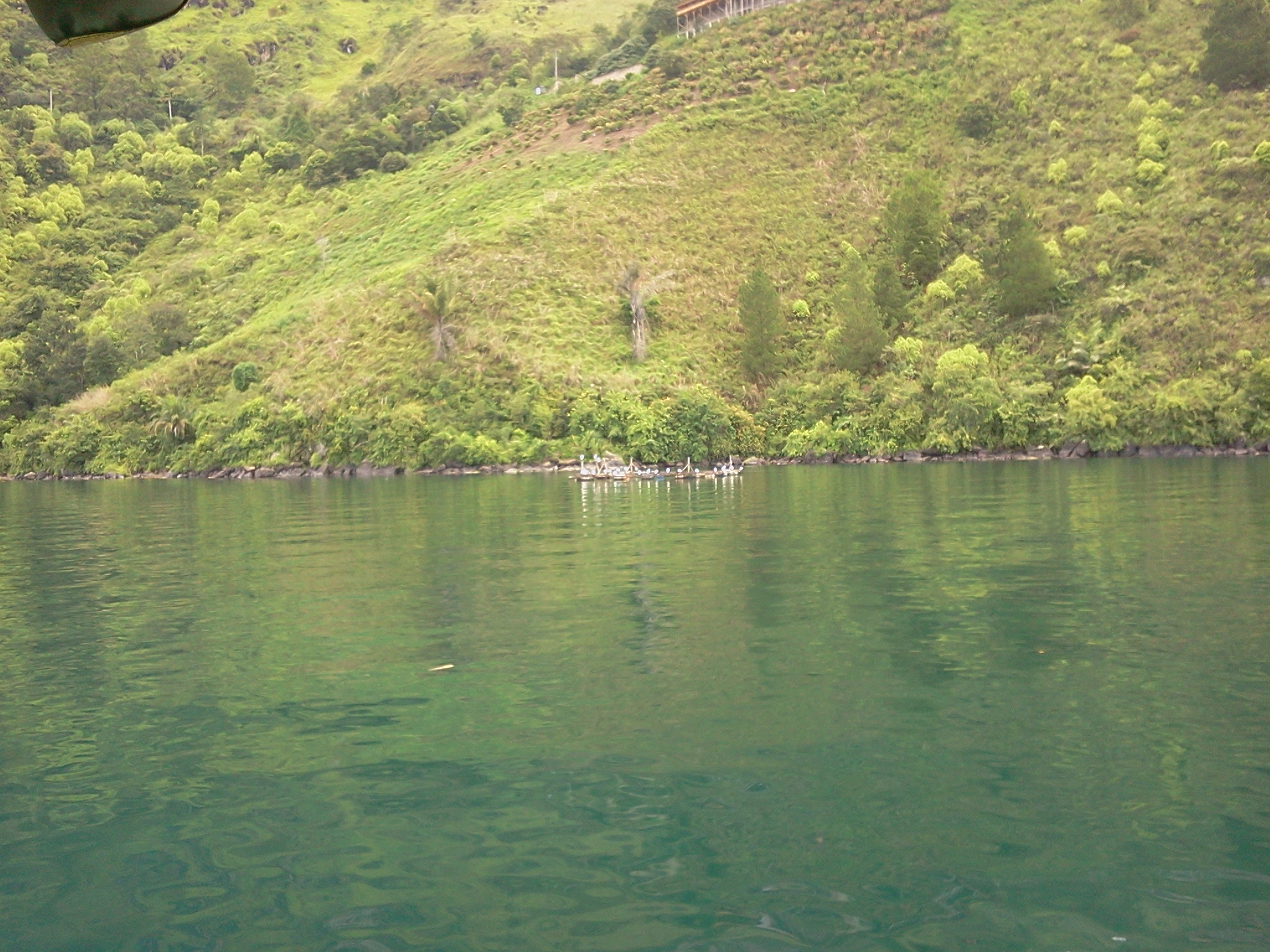 Birds @ Lake Toba